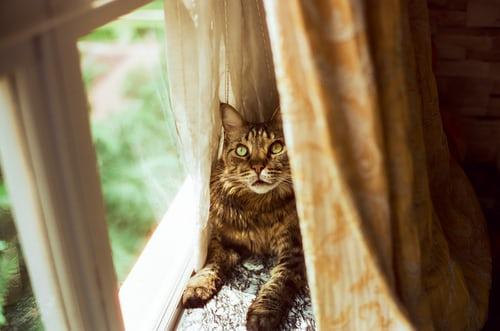 Az ablakpárkányon belülről egy cica melegszik a függöny mögött