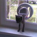 Cica, akivel összebútoroztál, lassan, észrevétlenül